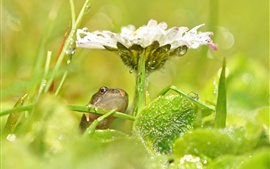 Preview wallpaper White flower, green leaves, frog, water drops