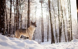 Preview wallpaper Winter, dog, snow, forest, trees