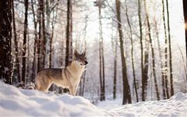 Inverno, cão, neve, floresta, árvores