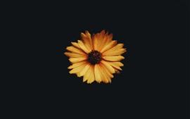 Primer plano de la flor amarilla, fondo de la oscuridad