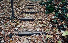 秋、葉、階段