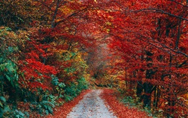 Outono, folhas vermelhas, caminho, árvores