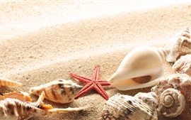 Preview wallpaper Beach, sands, seashells, starfish