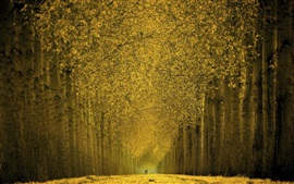 Preview wallpaper Beautiful autumn, trees, yellow leaves, path