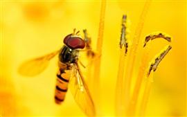 Пчела, желтый цветок, пестики