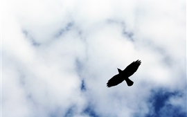 Preview wallpaper Bird flight silhouette, clouds, sky