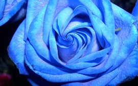 Preview wallpaper Blue rose close-up