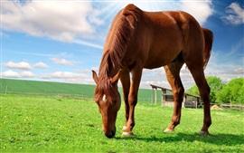 Cavalo castanho, prado, nuvens