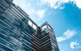 Edifício, céu azul, pássaros, fio