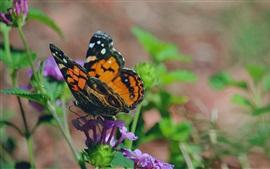 Бабочка, крылья, цветы, листья