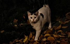 Preview wallpaper Cat, autumn, leaves, darkness