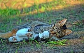 Gato brincalhão, chão, grama