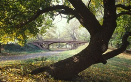 Central Park, trees, bridge, New York, USA