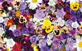 Colorful flowers, many kinds