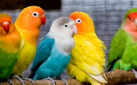 Preview wallpaper Colorful parrots, lovely birds