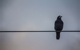 Preview wallpaper Crow standing on wire