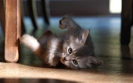 Preview wallpaper Cute kitten under chair