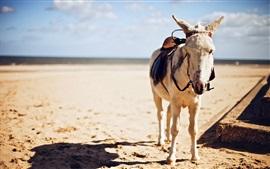 Donkey, luz do sol