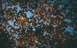 Preview wallpaper Dry leaves, tree, top view, autumn
