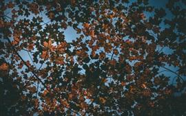 壁紙のプレビュー 乾燥葉、木、眺め、秋