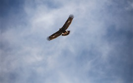 Preview wallpaper Eagle flight in the sky, wings, clouds
