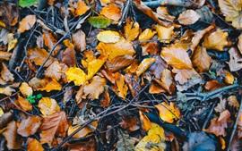 Folhagem caída no chão, molhada