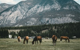 Preview wallpaper Five horses, mountain, trees, grass