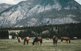 Cinco cavalos, montanha, árvores, grama