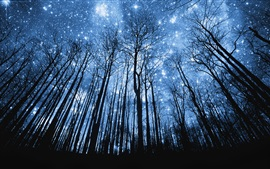 Preview wallpaper Forest, beautiful blue starry, night