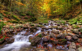 Forest, streams, stones, water, autumn