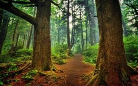 壁紙のプレビュー 森林、木々、道、霧