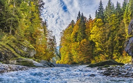 Forest, trees, river, autumn, clouds
