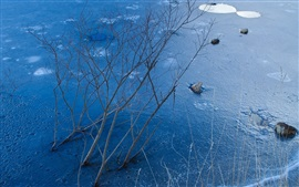 Frozen lake, winter, ice, tree branches