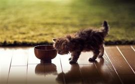 미리보기 배경 화면 모피 새끼 고양이, 사발