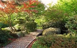 Jardin, arbres, chemin de pierres, automne