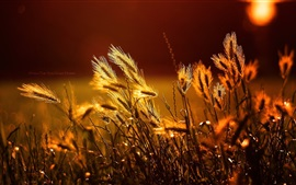 Grass under sunshine, bokeh