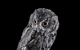 Preview wallpaper Gray owl, black background