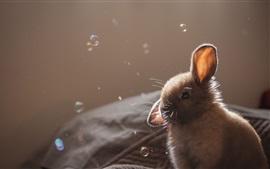 壁紙のプレビュー グレーウサギ、泡