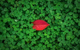 Preview wallpaper Green clover, one red leaf