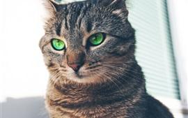 Зеленая кошка, серые полосы