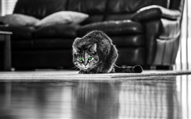 Preview wallpaper Green eyed gray cat, front view, living room