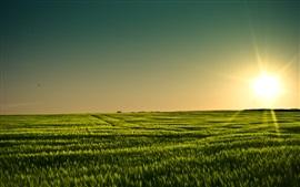 Green field, sunset