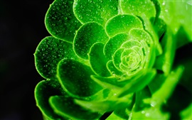 Preview wallpaper Green flower macro photography, water drops