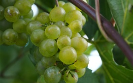 Preview wallpaper Green grapes, fruit