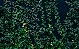 Preview wallpaper Green leaves, plants, wall