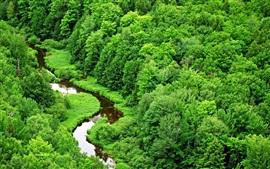 Зеленый тропический лес, ручей