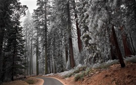 Preview wallpaper Hoarfrost, forest, trees, path, cold