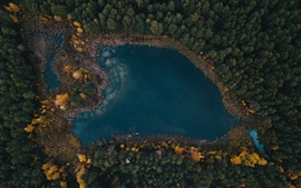 Preview wallpaper Lake, forest, trees, top view, autumn