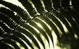 Folhas, luz solar, luz de fundo