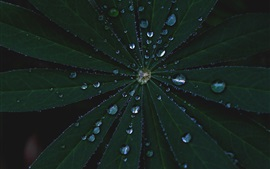 Leaves, water drops, darkness